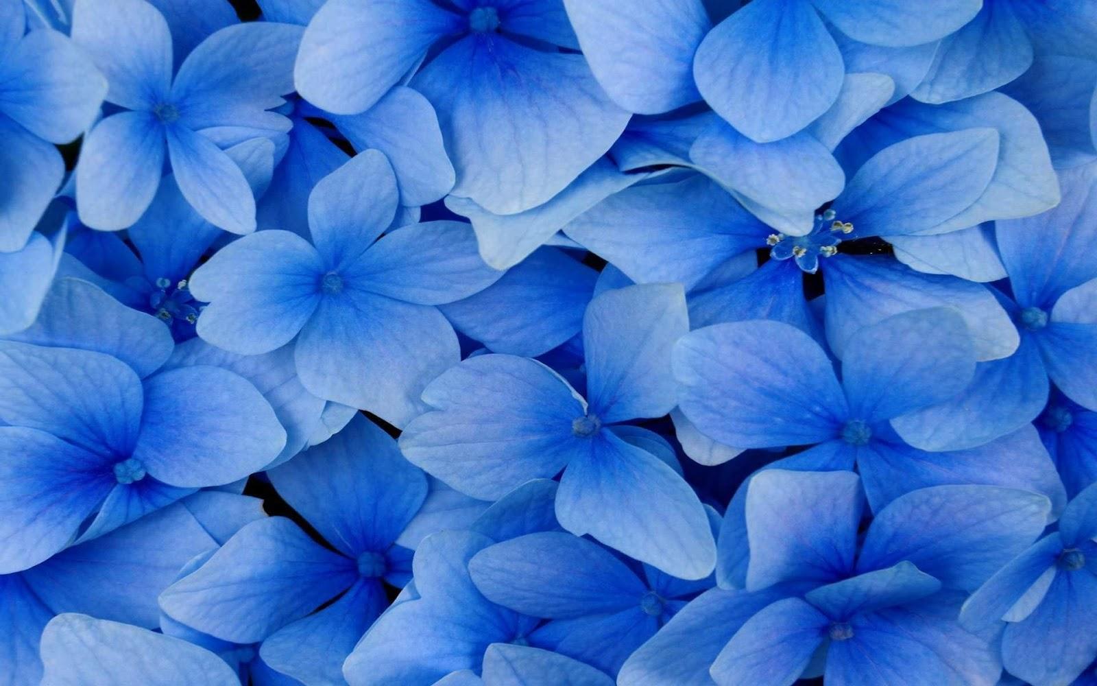 Dark blue and white wallpaper wallpapersafari black and white wallpapers close up blue flowers blue wallpaper dhlflorist Images