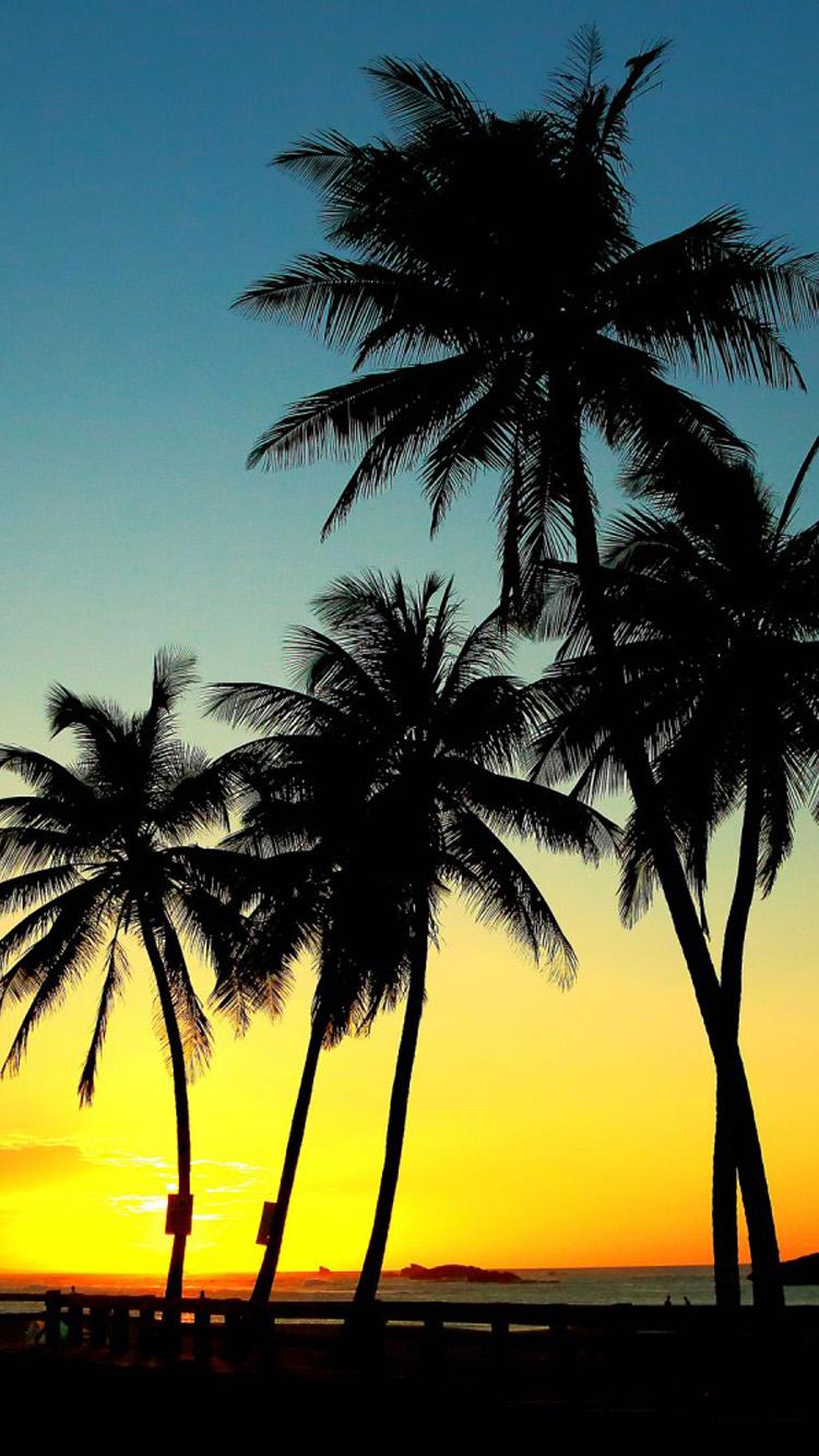 Sunset Palm Trees Wallpaper - WallpaperSafari