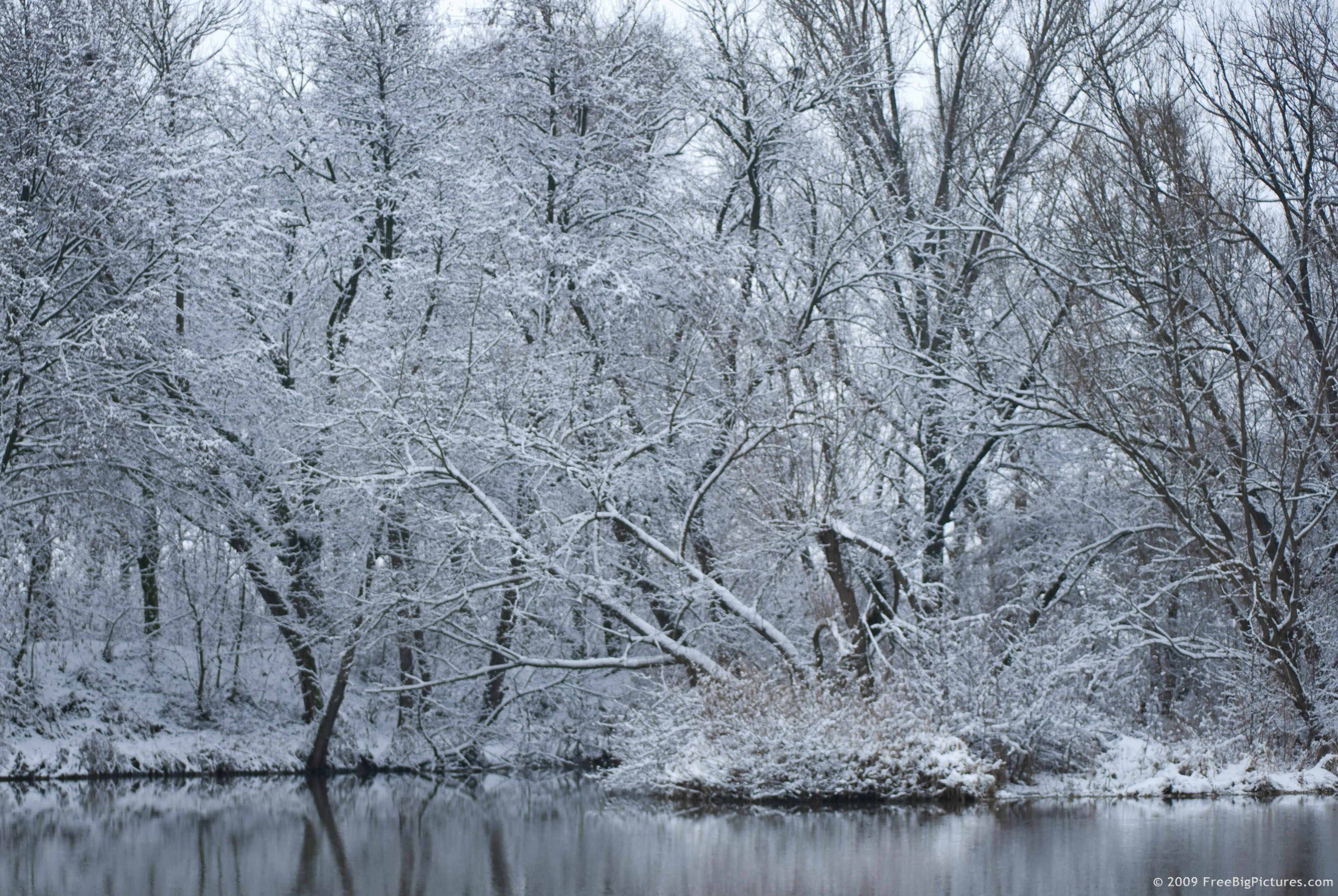 Snow Trees 3242x2171