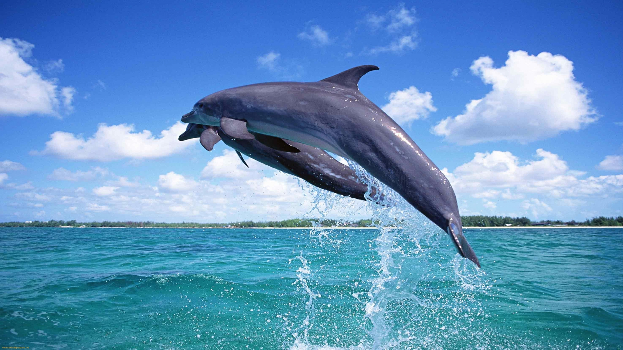 Animal Wallpapers Cute Dolphin Jumping Fish Wallpapers 7486 2048x1152