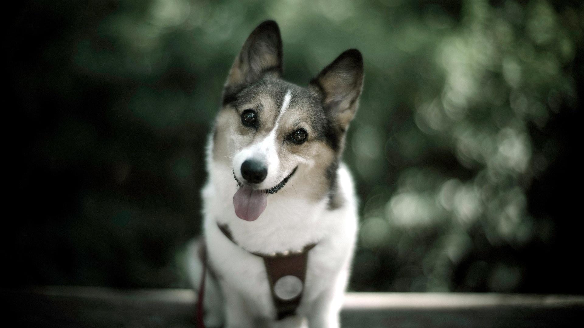 1920x1080 Cute Dog Photo desktop PC and Mac wallpaper 1920x1080