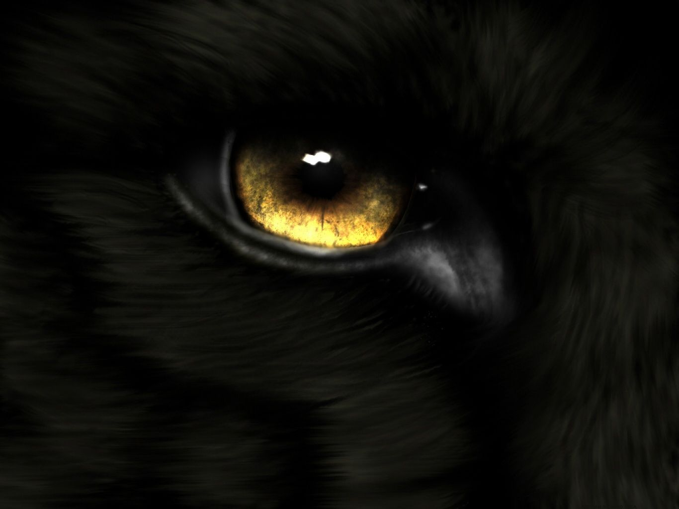 Animal Eye Gold Wolf Wallpaper Eyes wallpaper Wolf eyes Wolf 1366x1024