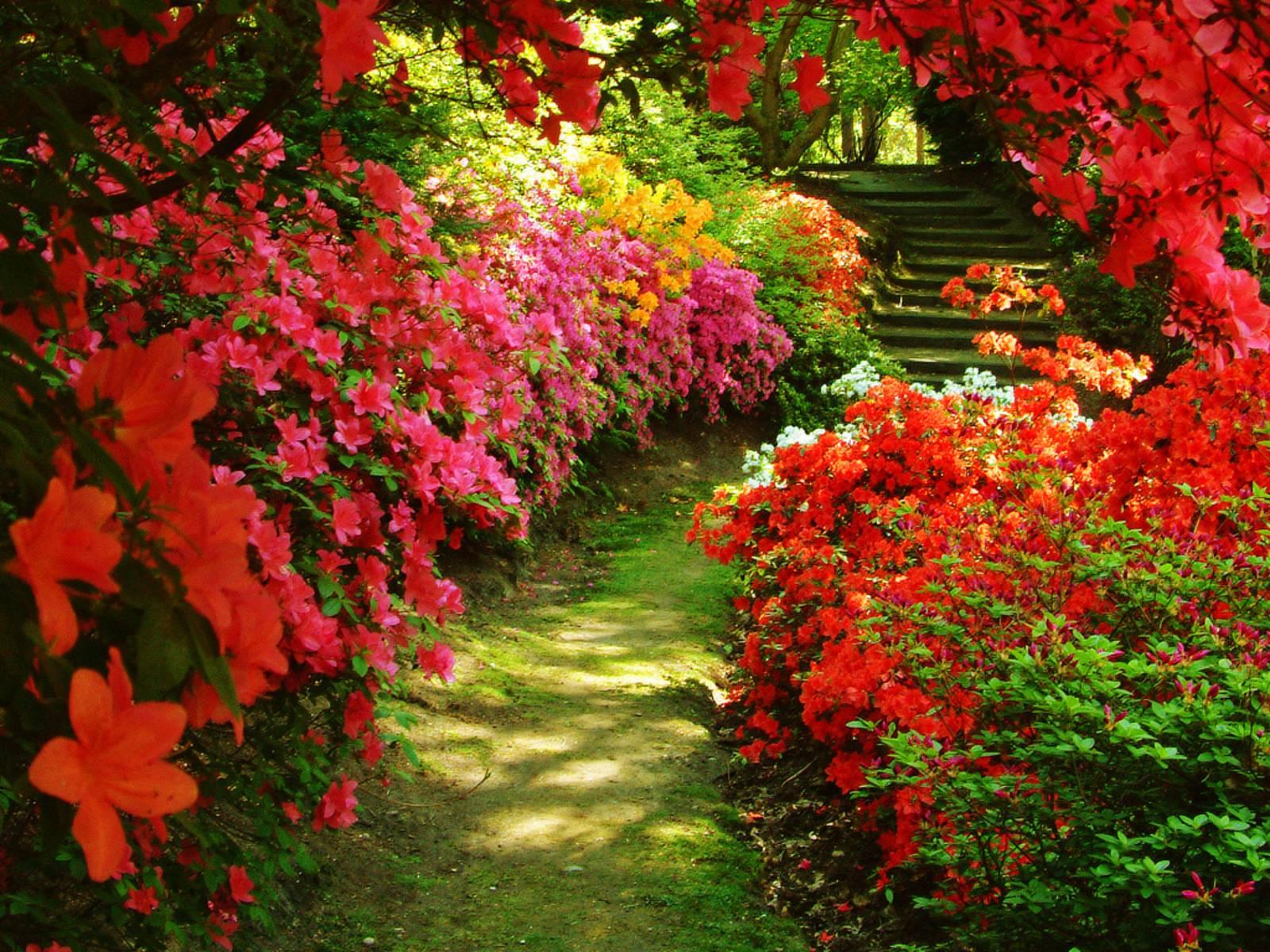 Flower Garden Backgrounds 1600x1200
