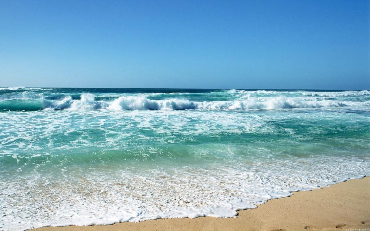 壁纸1280×800海洋世界动态桌面壁纸壁纸,海洋世界动态 ...