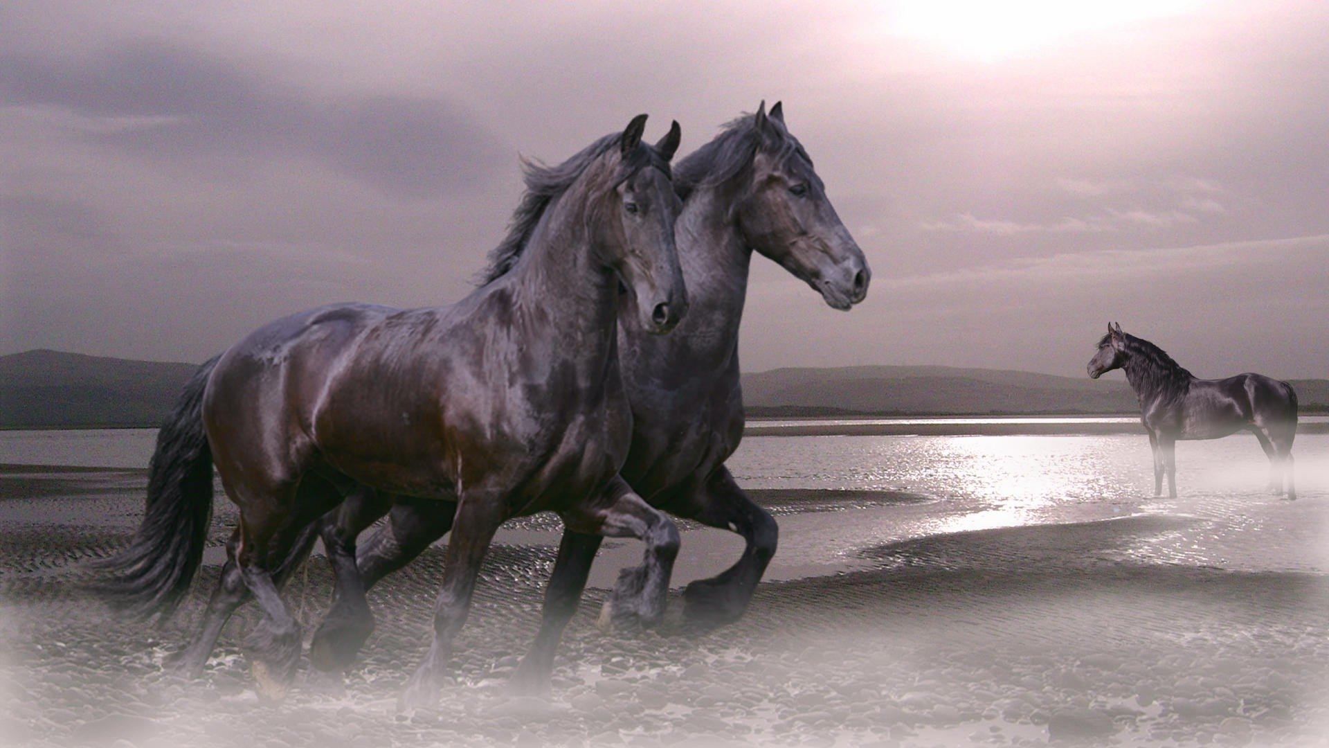 35 1920x1080 Hd Horse Wallpapers On Wallpapersafari
