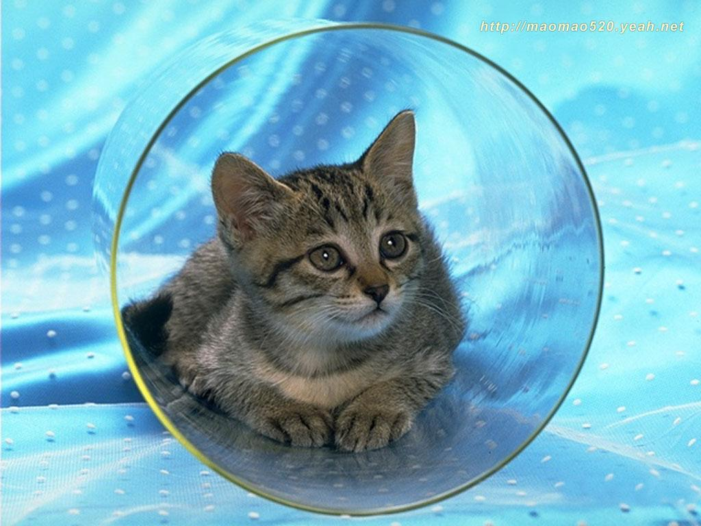 Cute Kitten Wallpaper   Kittens Wallpaper 13939005 1024x768