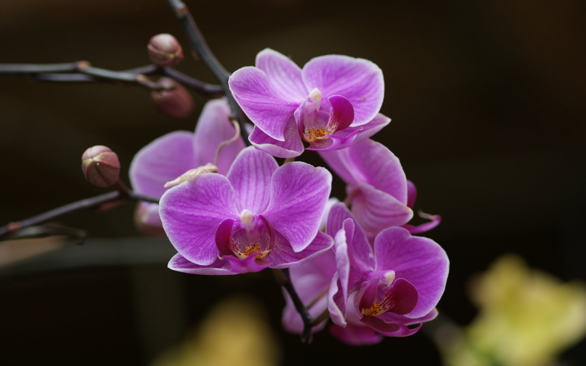 Pics Photos   Purple Orchids Wallpaper 1920x1200