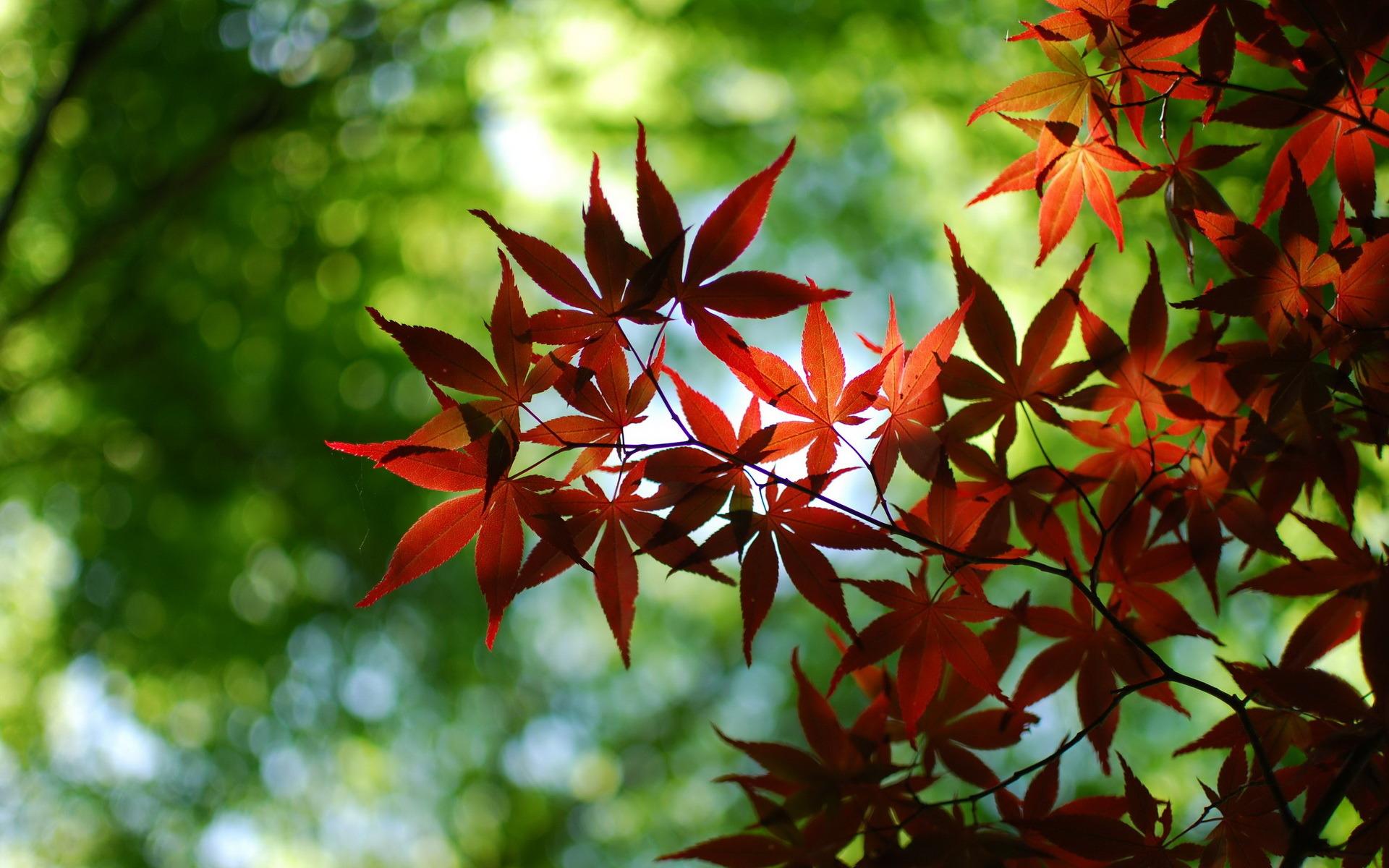 Leaves wallpaper 28194 1920x1200