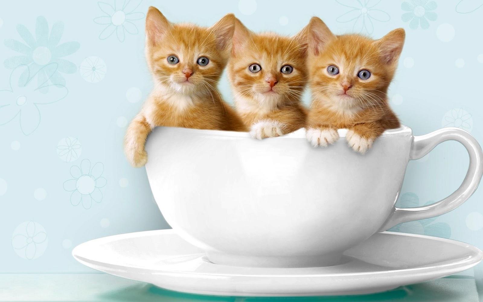 Koleksi 7500  Gambar Animasi Kartun Korea Kucing Lucu HD Terbaru