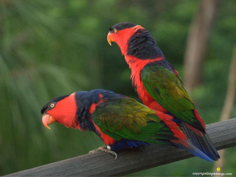 Bird Wallpapers Bird Wallpapers Bird Desktop Wallpapers 800x600