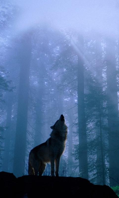 wolves live wallpaper brings you the best new background pictures of 480x800