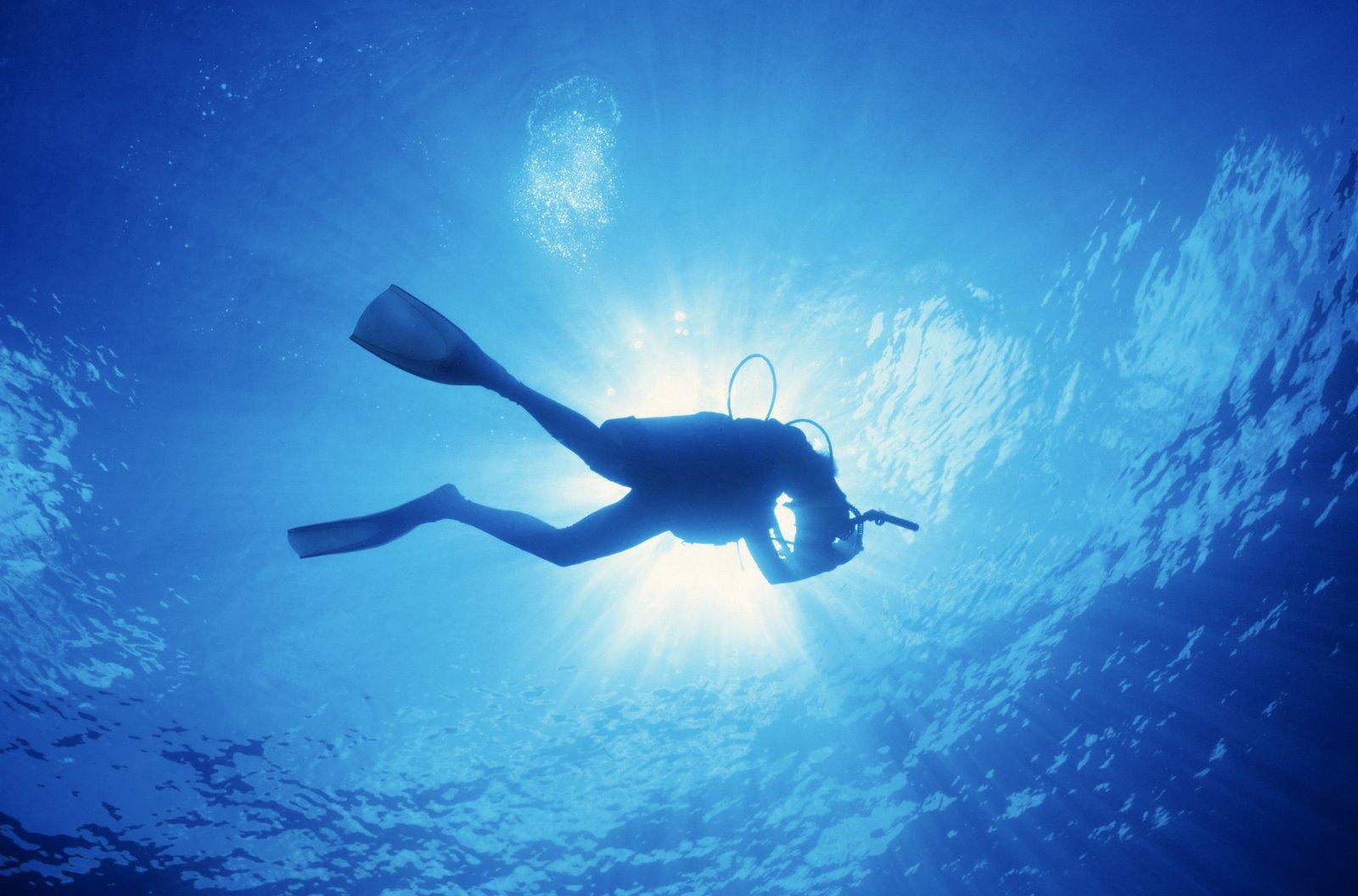 Displaying 9 Images For   Scuba Diving Wallpaper High Resolution 1600x1056