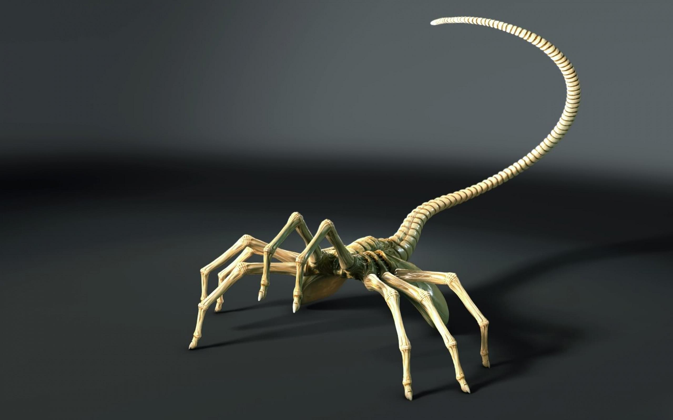 HD Scorpion Backgrounds 2560x1600