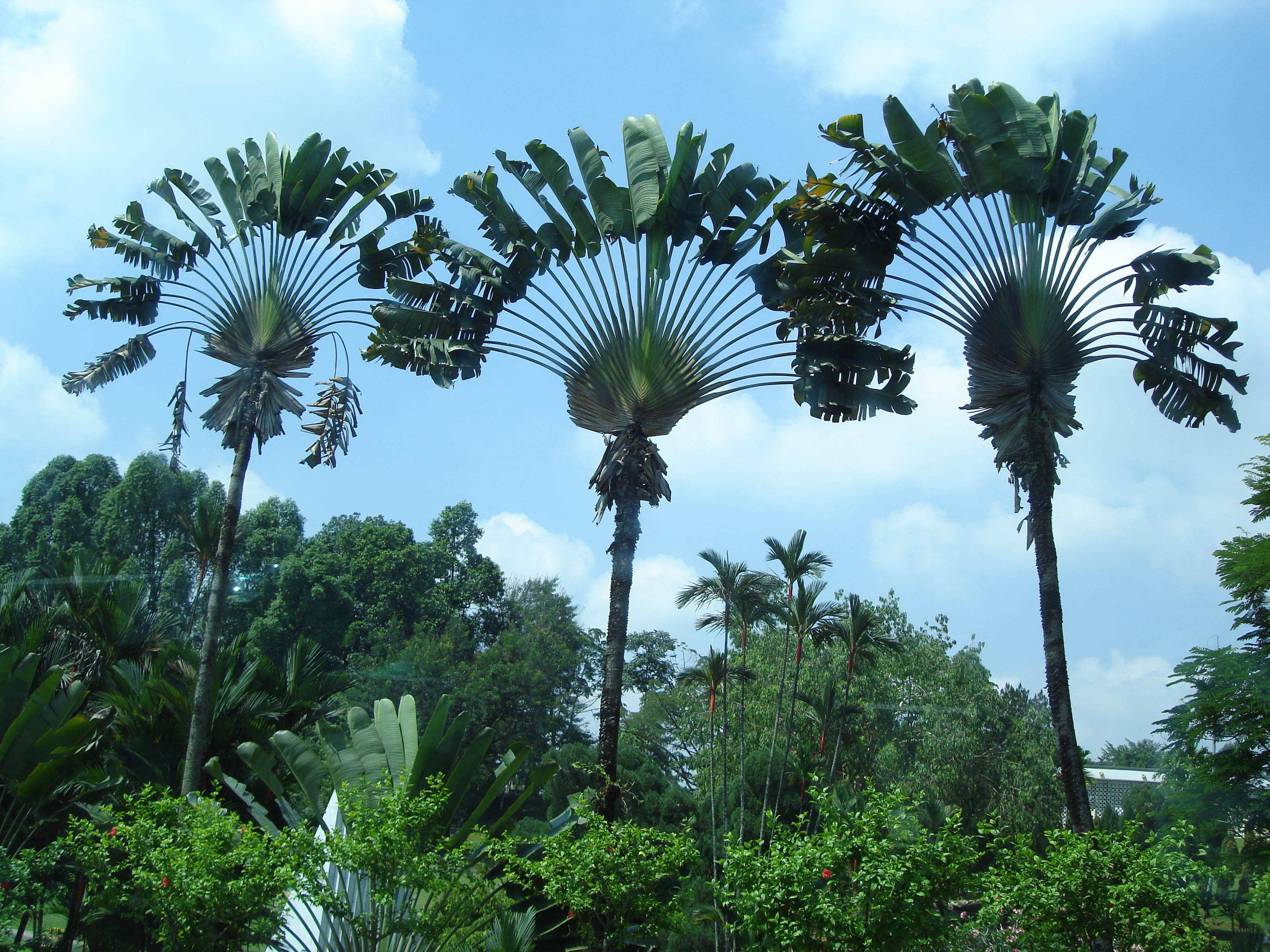 palm trees jpg 3264x2448