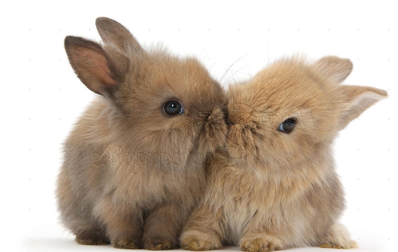 Cute Baby Bunny Rabbit Wallpaper Backgrounds 1330x842