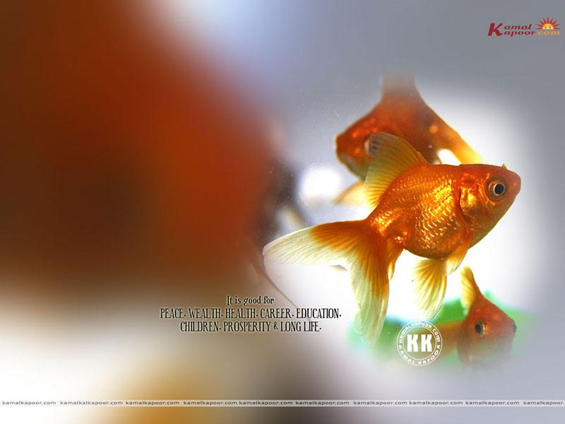 Feng Shui Wallpapers 800x600