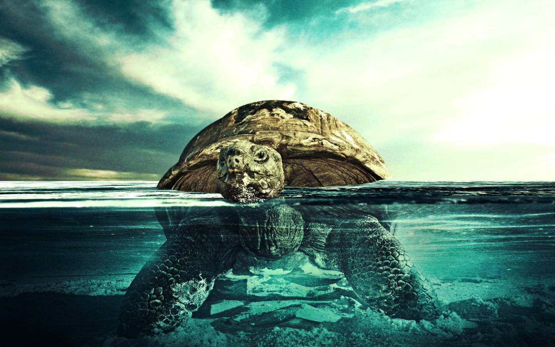 1440x900px Underwater Ocean Wallpaper Wallpapersafari