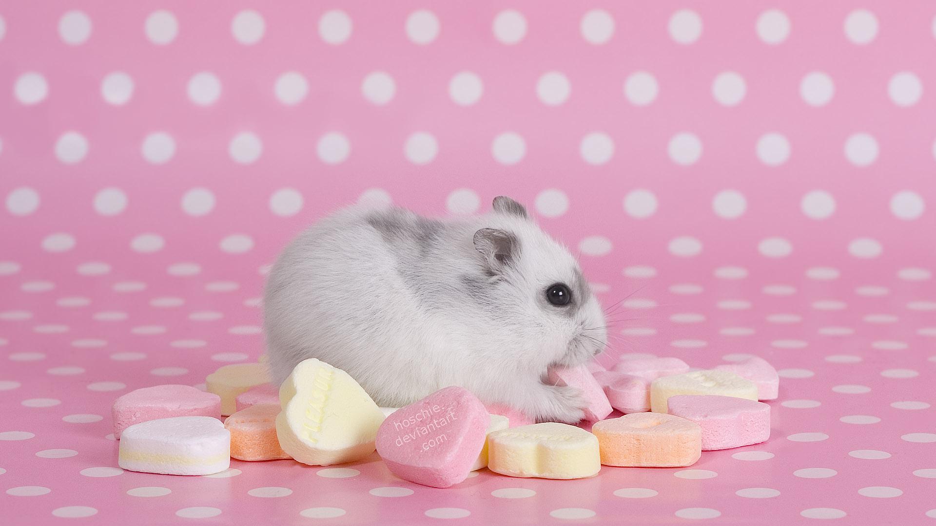 Pics Photos   Hamster Quotes Wallpaper Hd Desktop Hamster 1920x1080