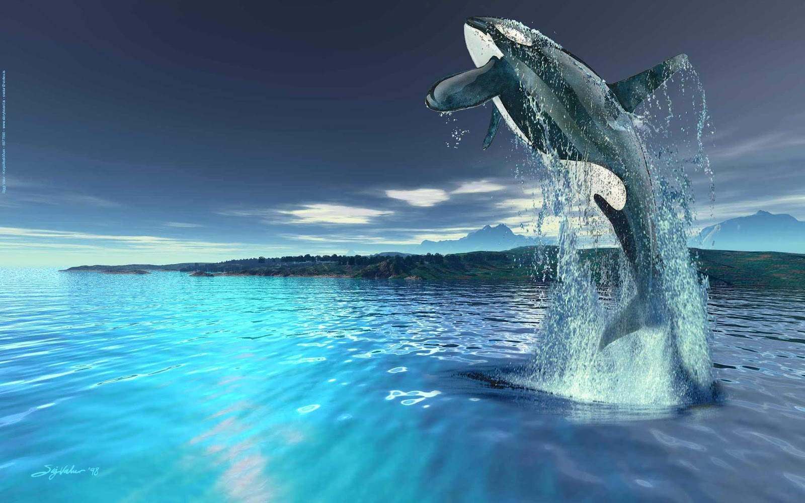 killer whales wallpapers   Funny Animals 1600x1000