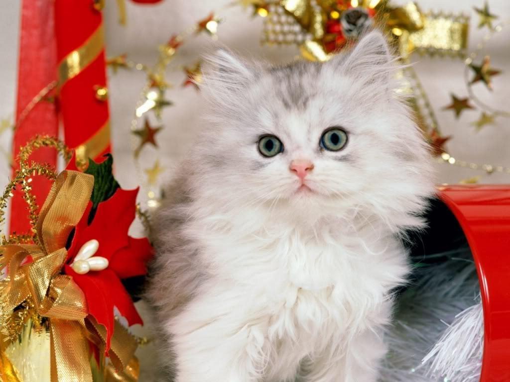 Christmas Cat Wallpaper   Cats Wallpaper 9638580 1024x768
