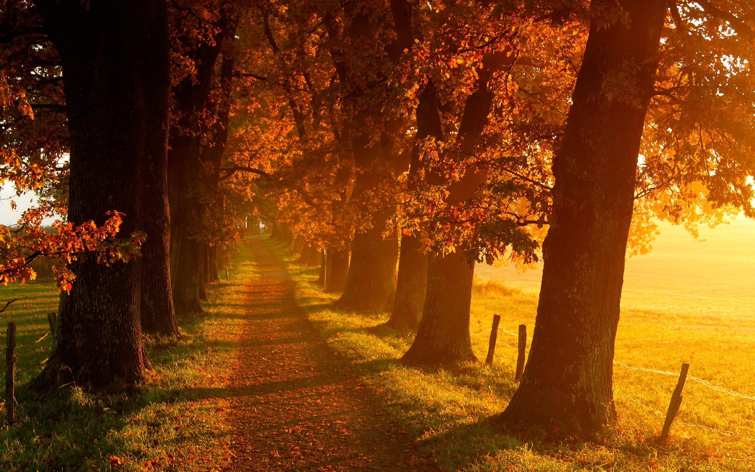 Beautiful Fall Scenery Wallpaper - WallpaperSafari