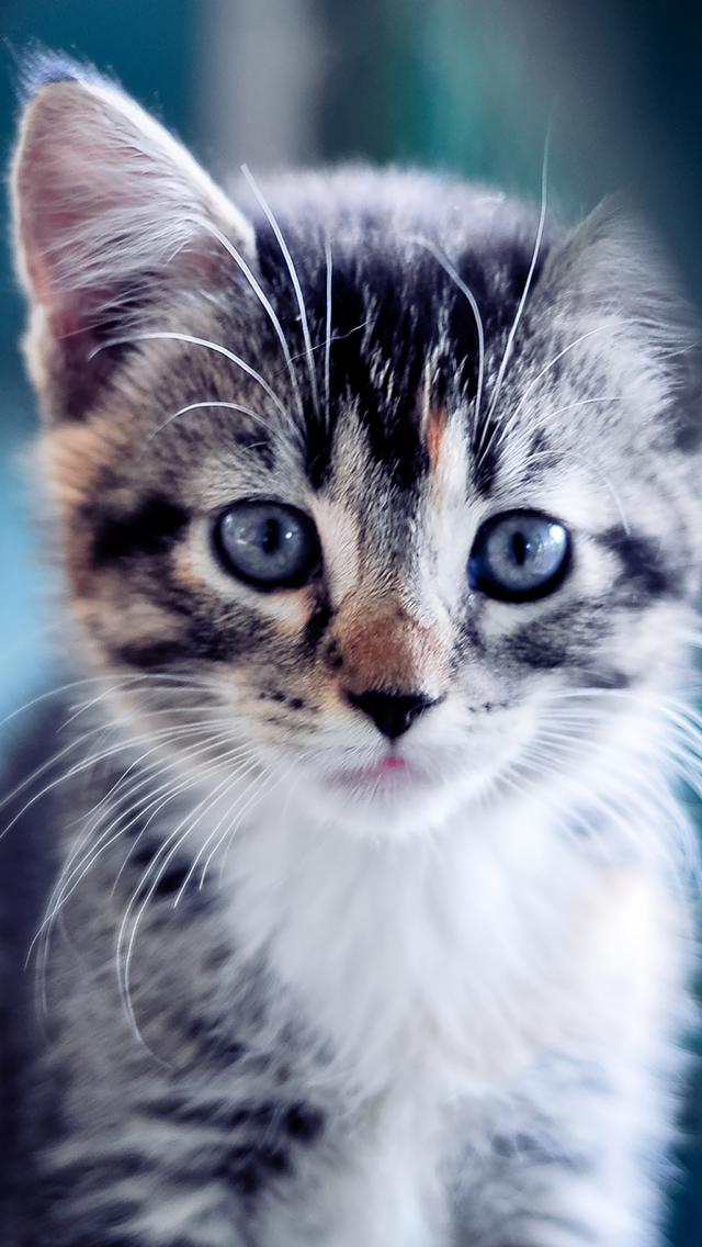 Free Download Cute Kitten Iphone 5s Wallpaper Download Iphone Wallpapers Ipad 640x1136 For Your Desktop Mobile Tablet Explore 48 Cute Cat Iphone Wallpaper Wallpaper For Cats Cute Cats And