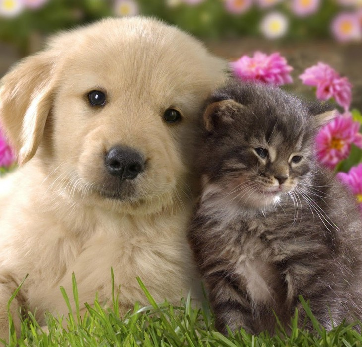 Cats and Dog Wallpaper High Definition Wallpapers High 730x700
