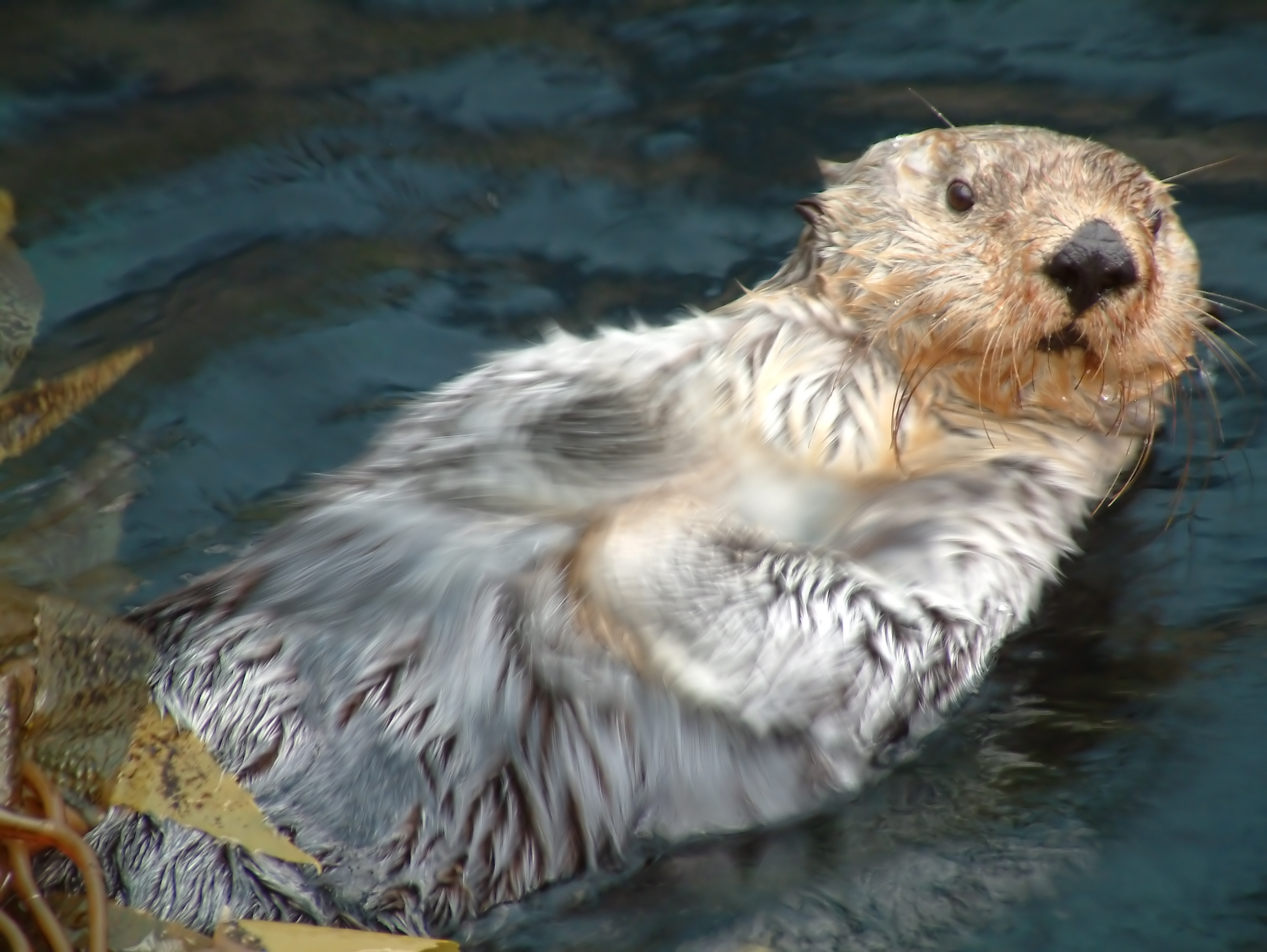 River Otter Images Images Pictures   Becuo 2832x2128