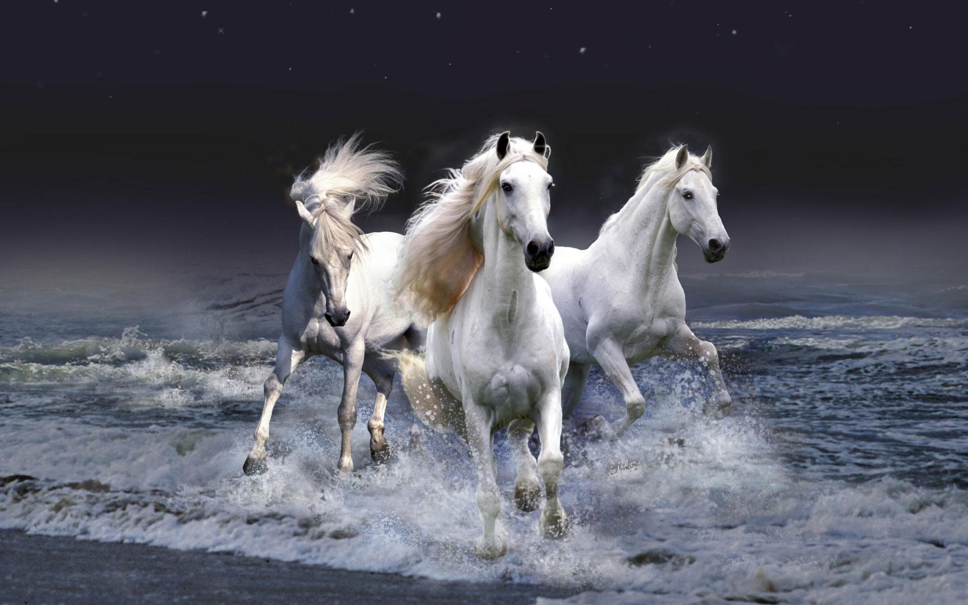 horse wallpaper hd   Magic4Wallscom 1920x1200