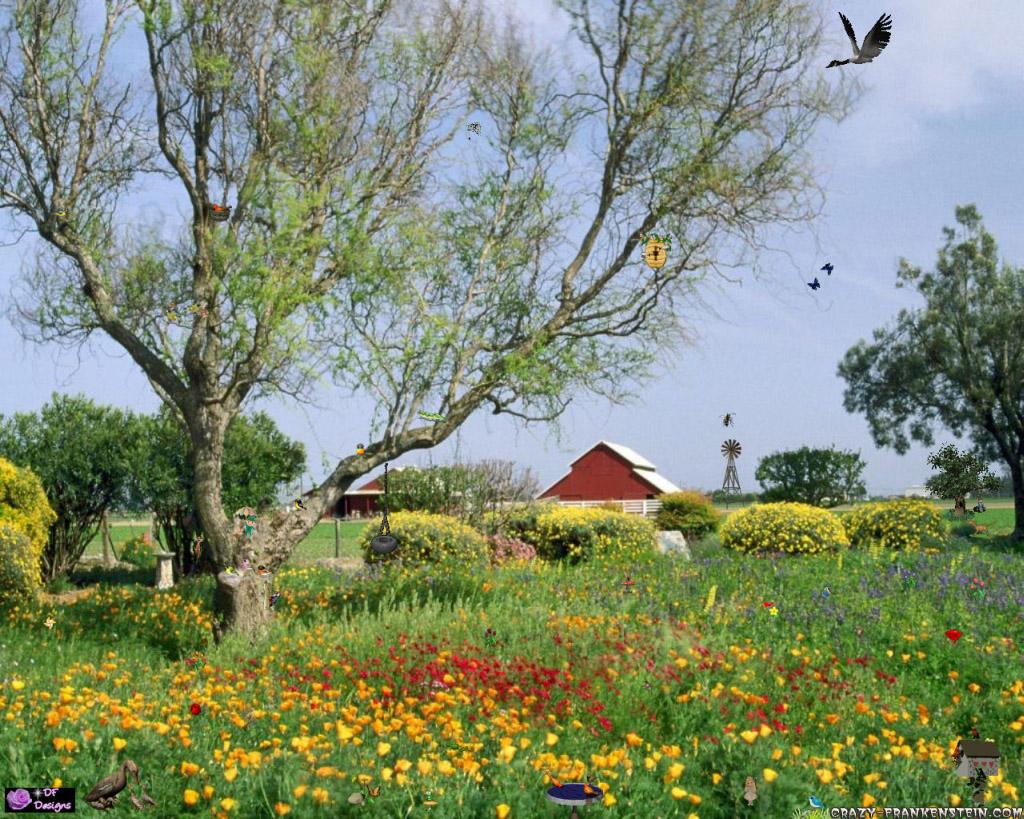луг сад дворик трава  № 2691621 загрузить