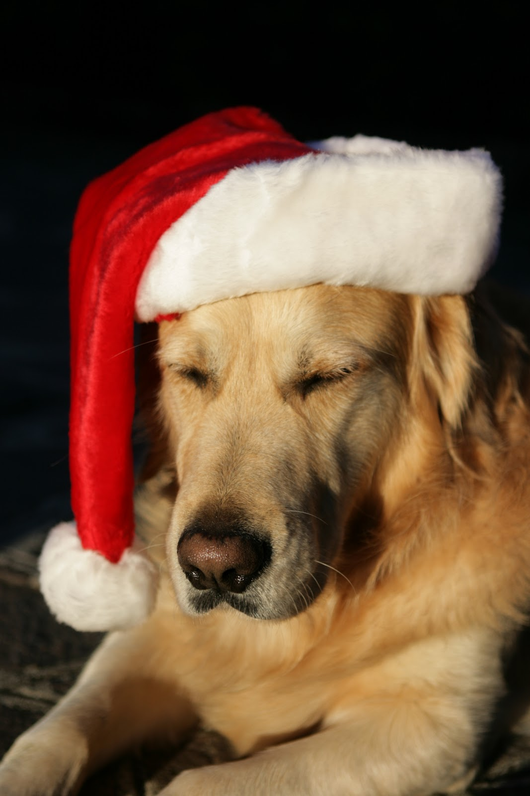 Image Result For Puppy Christmas Wallpaper