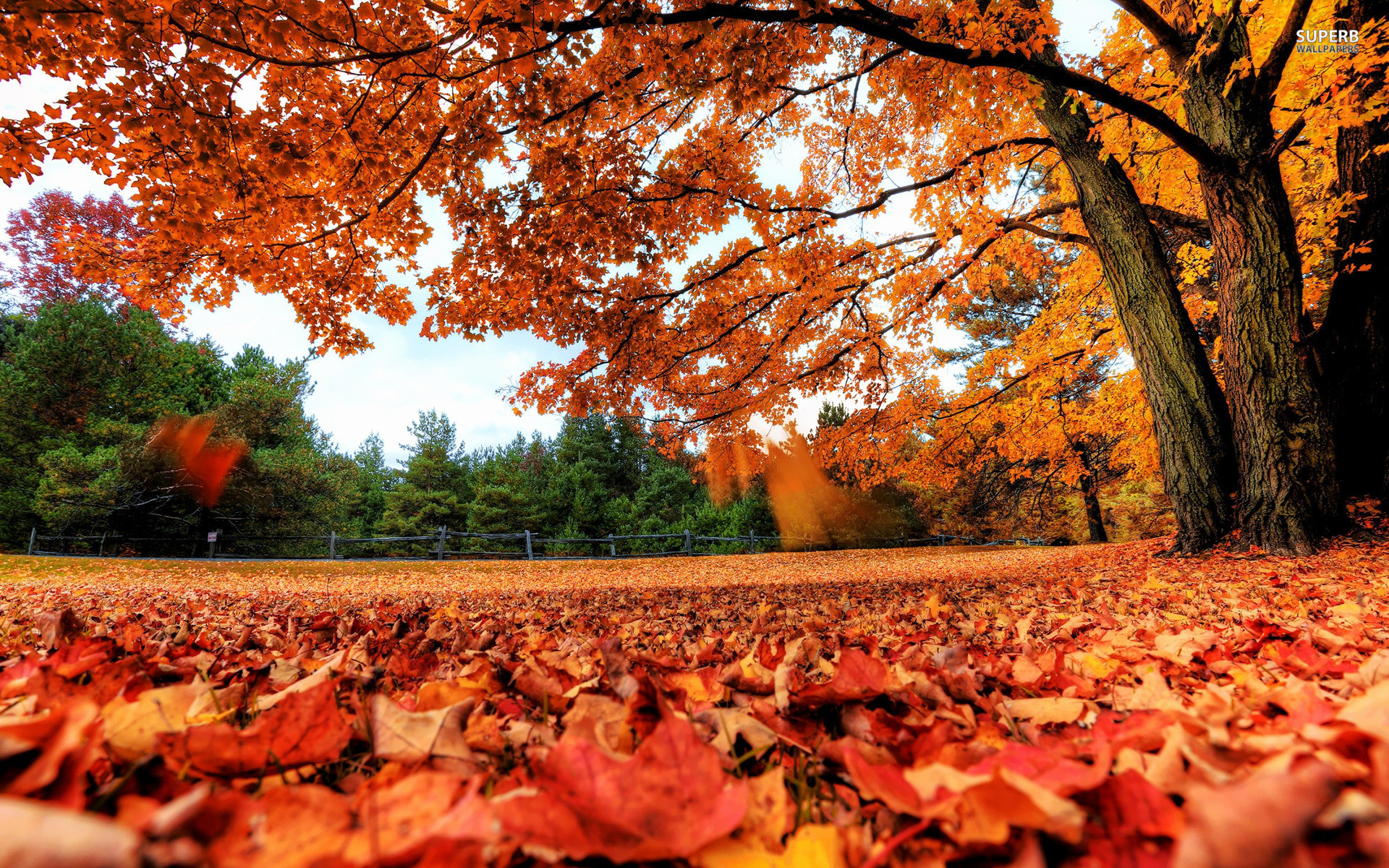 Fall Wallpaper for Desktop 68 images 1920x1200