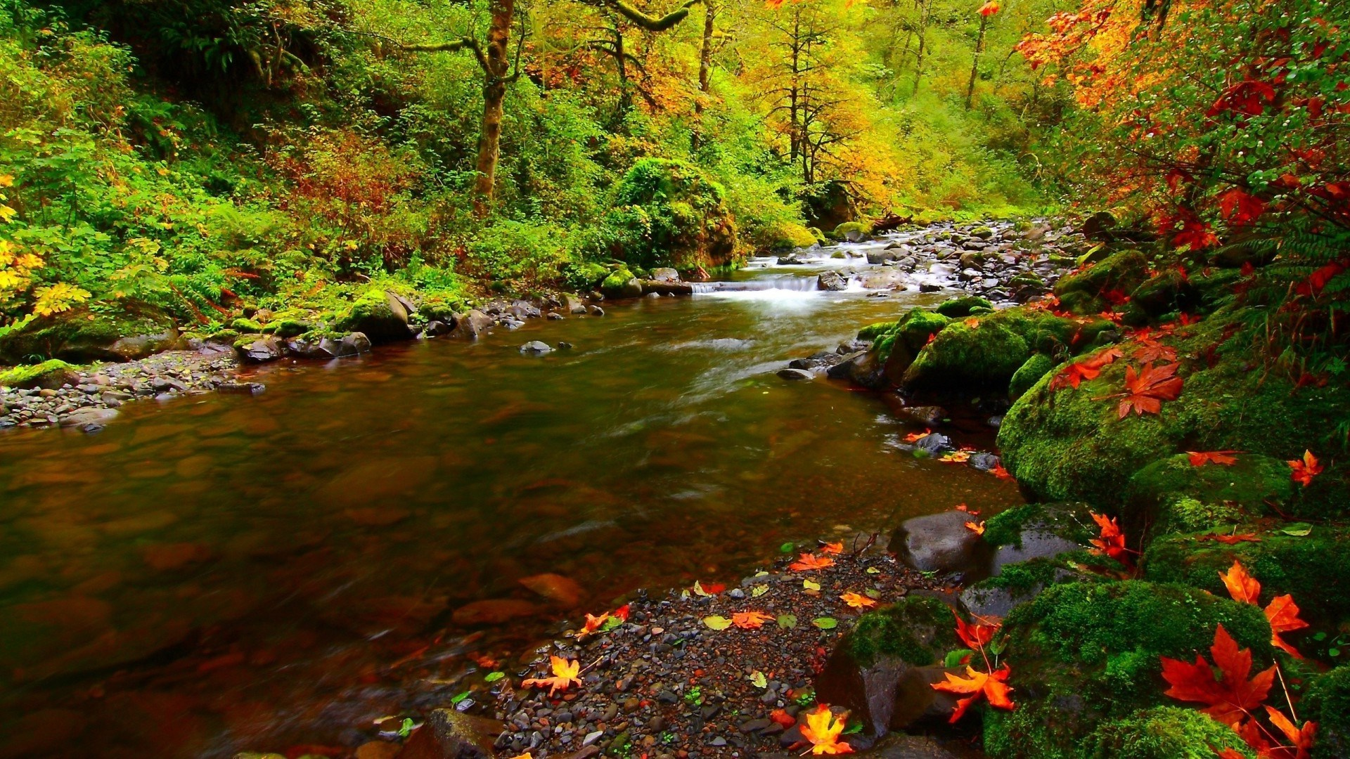 River Rocks Autumn Natural Desktop HD Wallpapers   Large 1920x1080
