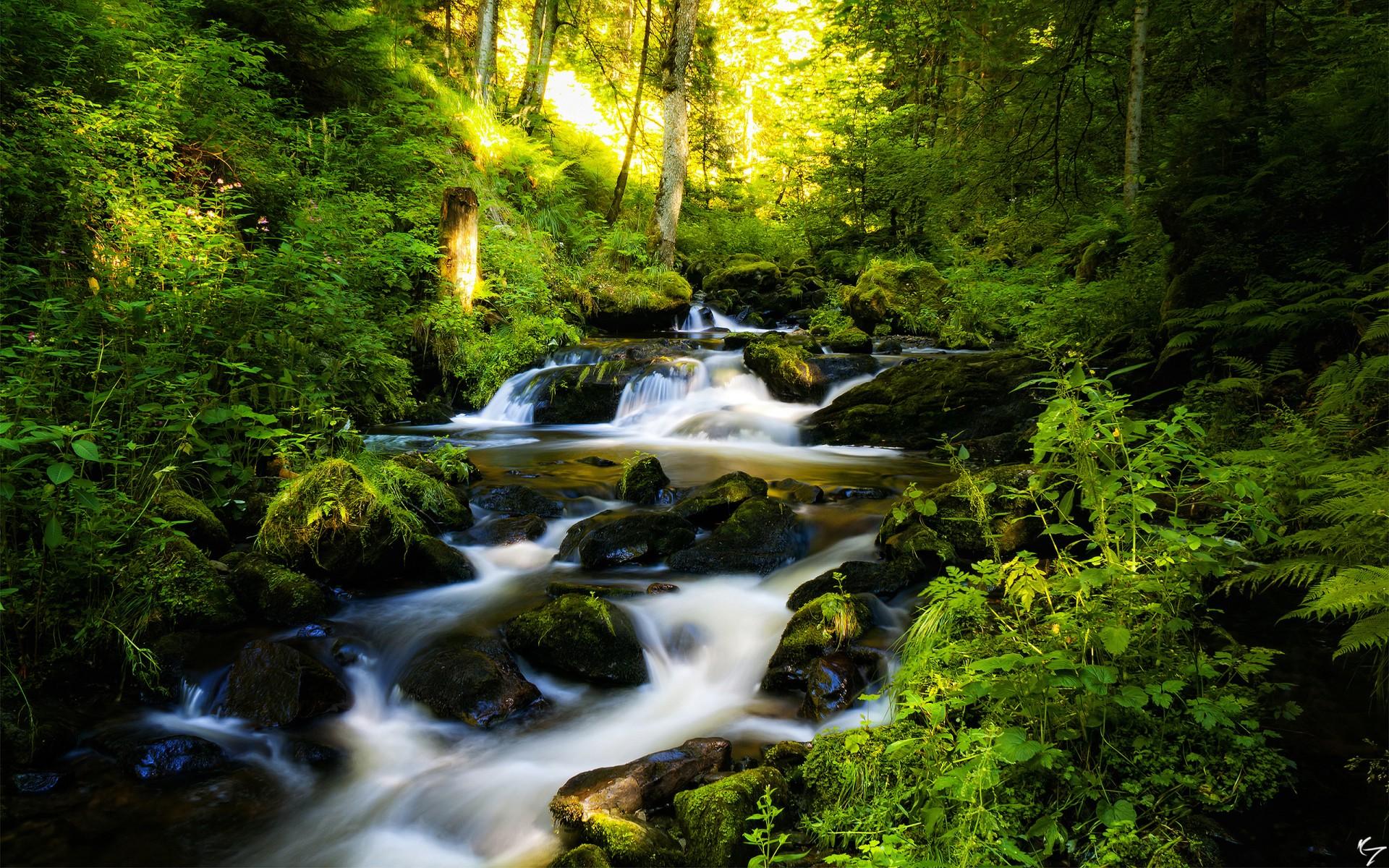 Forest waterfall rocks trees rivers stream landscape plants wallpaper 1920x1200
