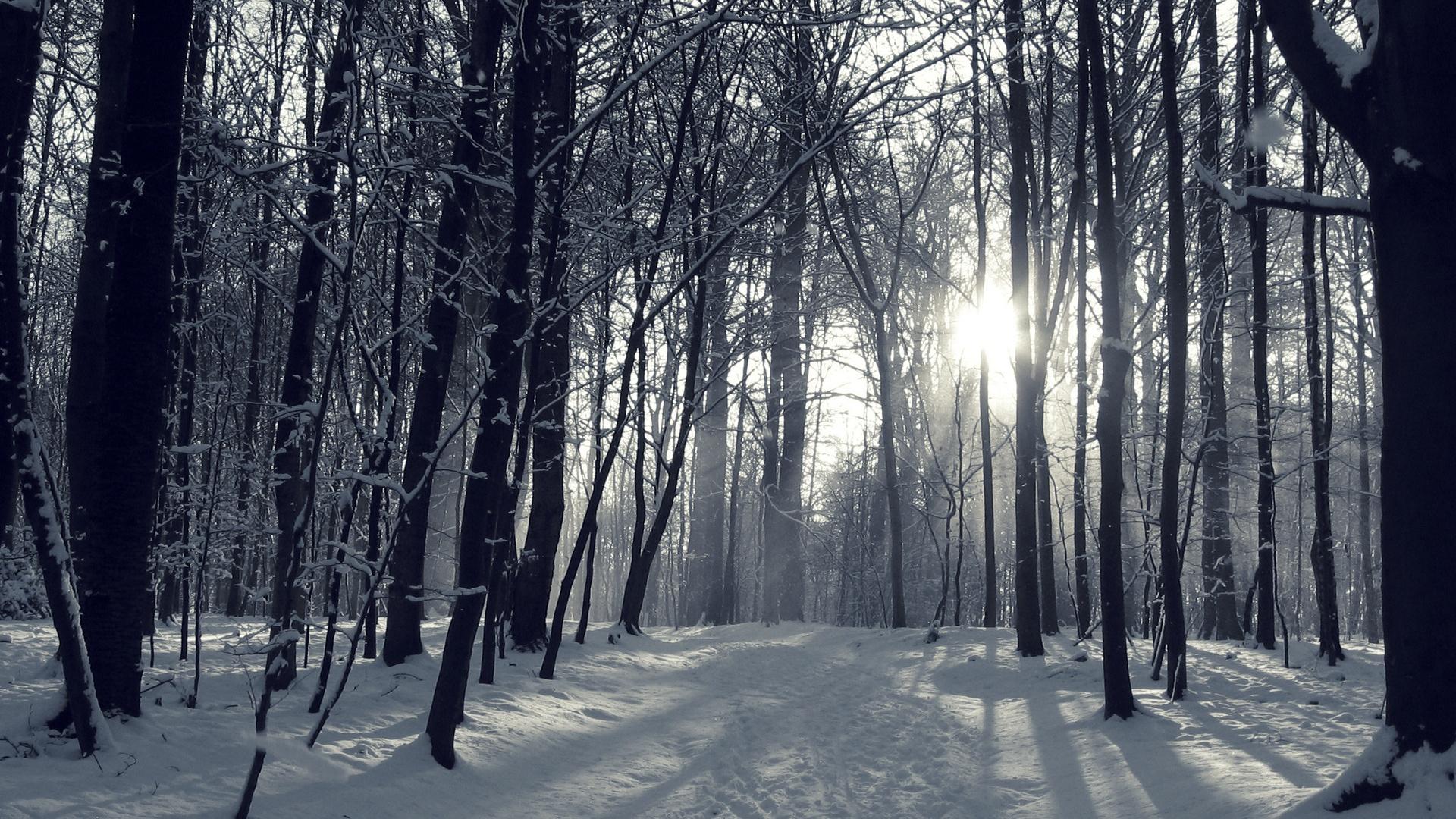 Winter Forest Wallpaper Wallpapersafari