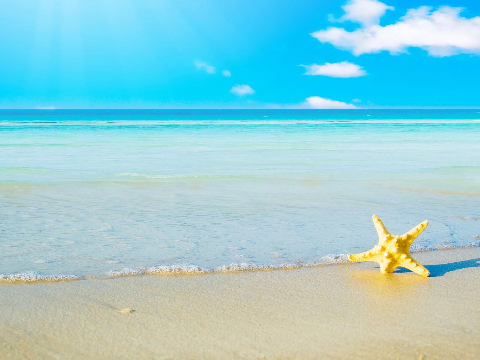 star fish sea beach sand wallpaper 10   o 1600x1200