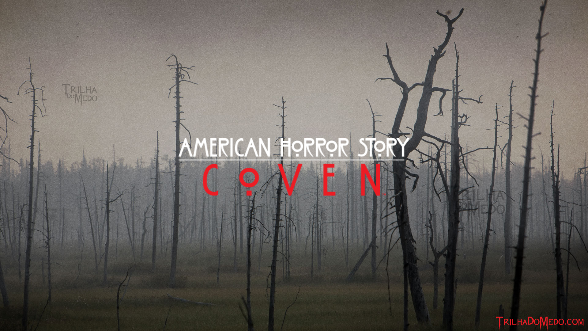 Free Download American Horror Story Coven Wallpaper American