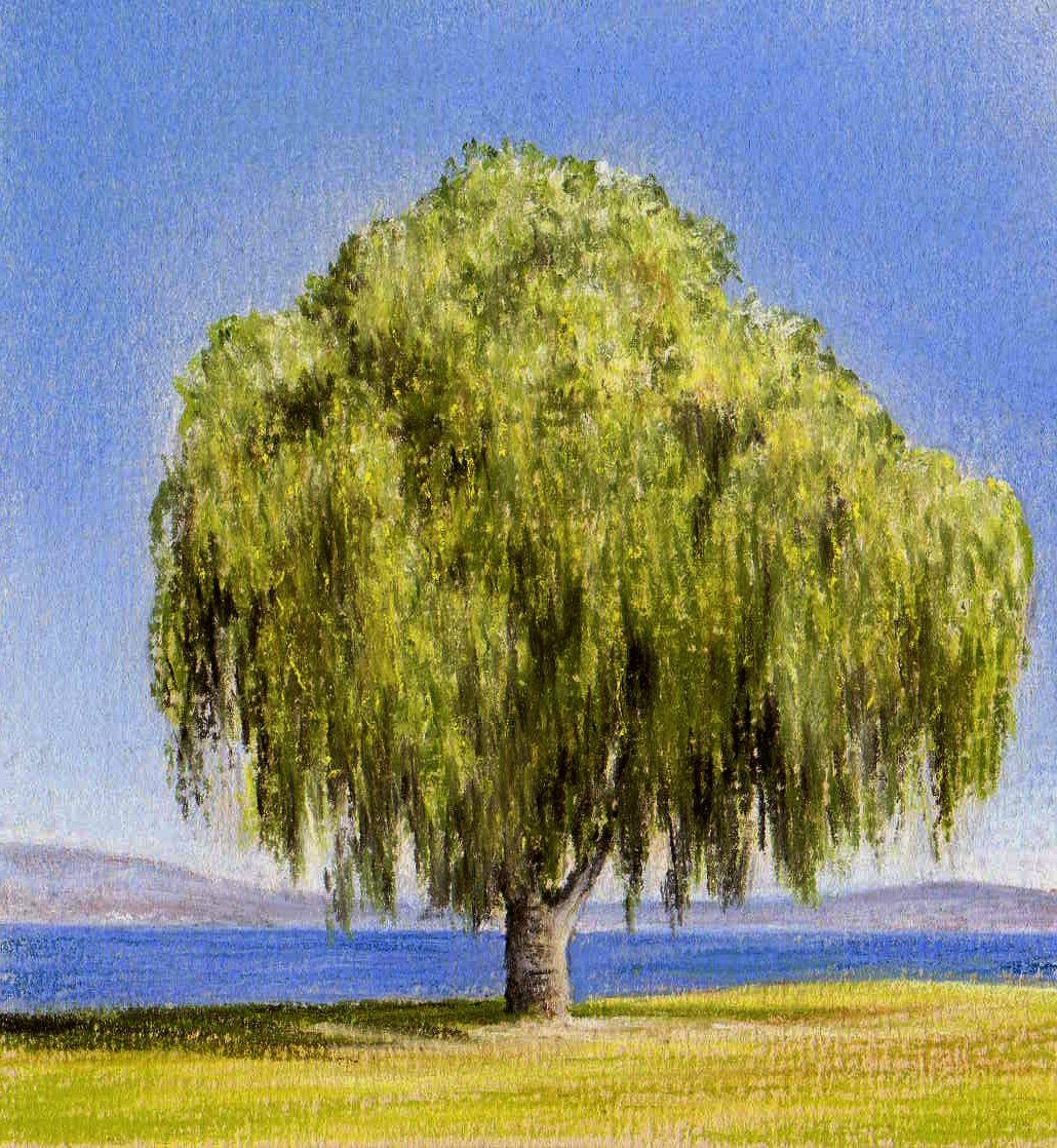 Willow Tree Painting Anime Wallpaper 1030x1118