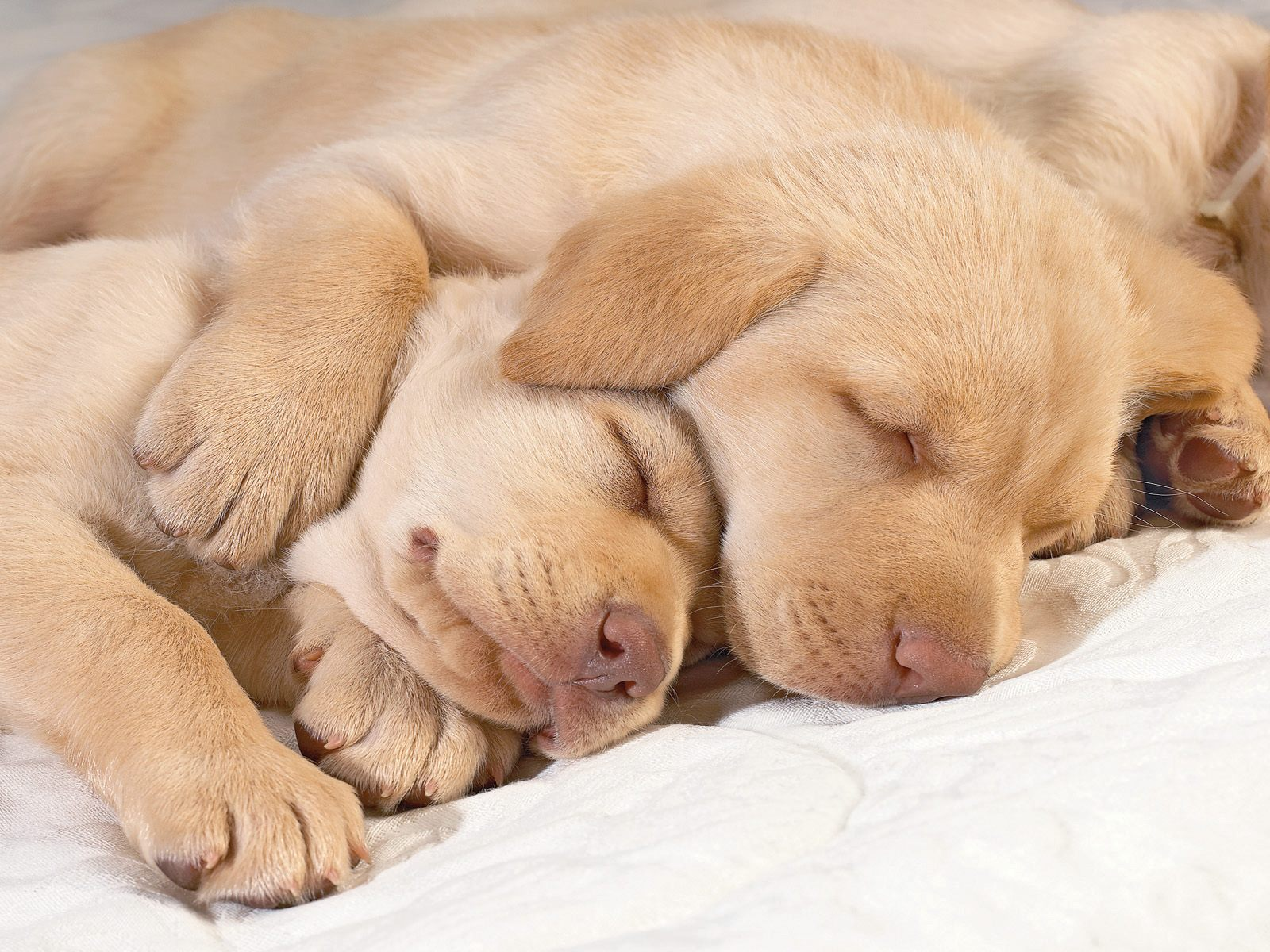 Cute Puppies Pictures Wallpaper of Dog Breeds 1600x1200