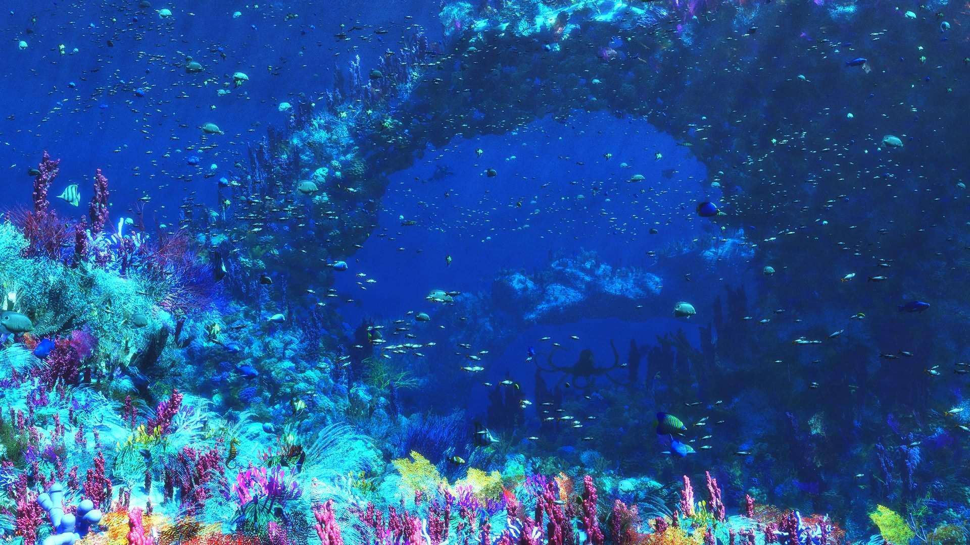 Animal   Sea Life Wallpaper 1920x1080
