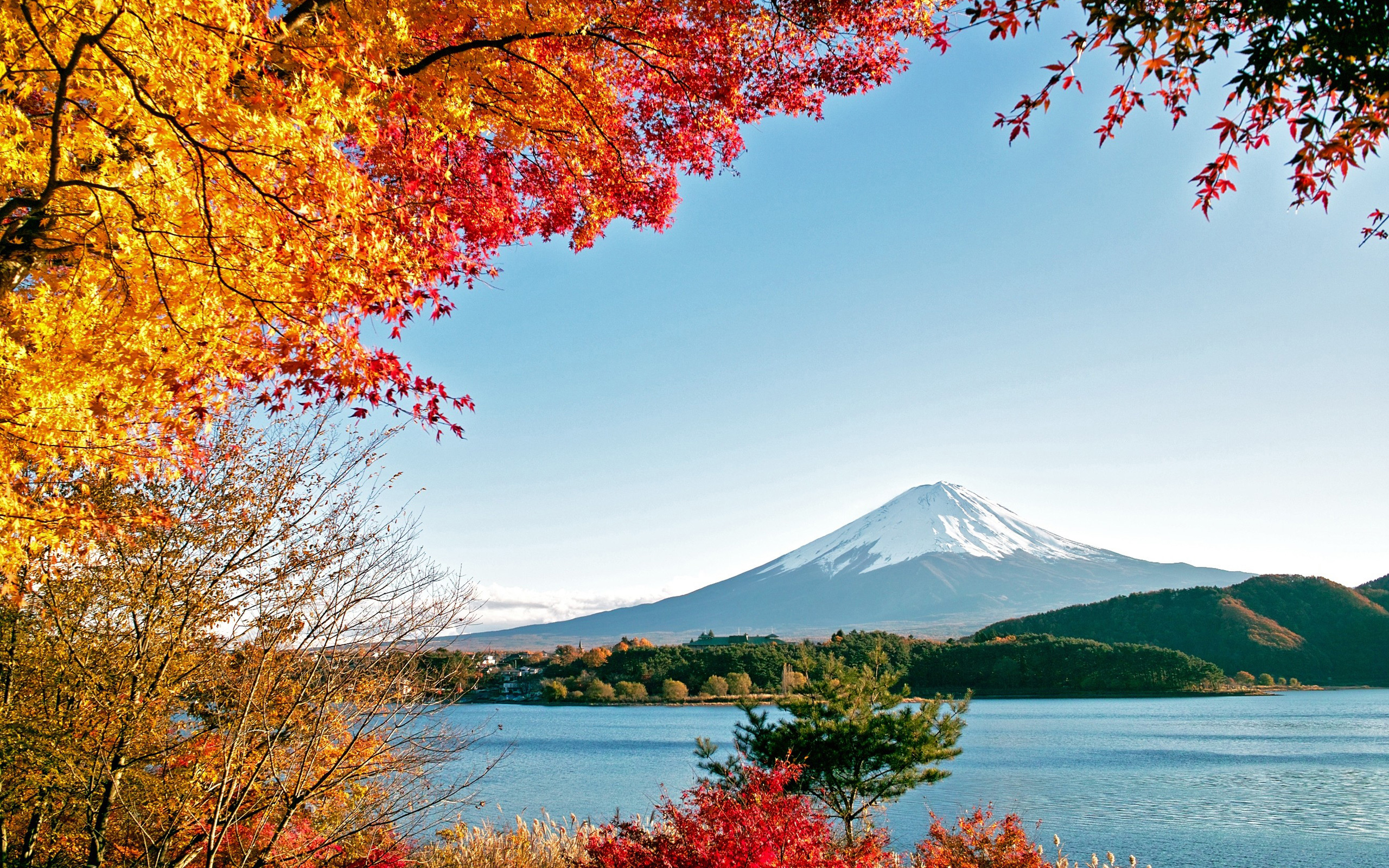 Autumn Trees Colorful Leaves HD Wallpaper 2560x1600