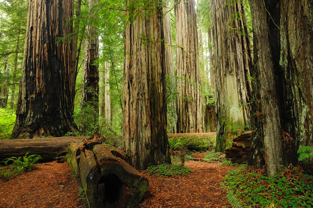 10 Best HD Redwood National Park Wallpapers 1000x665