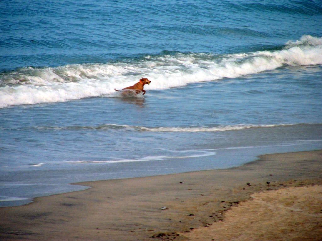 List Of Outer Banks Dog Friendly Restaurants First Flight Rentals 1024x768