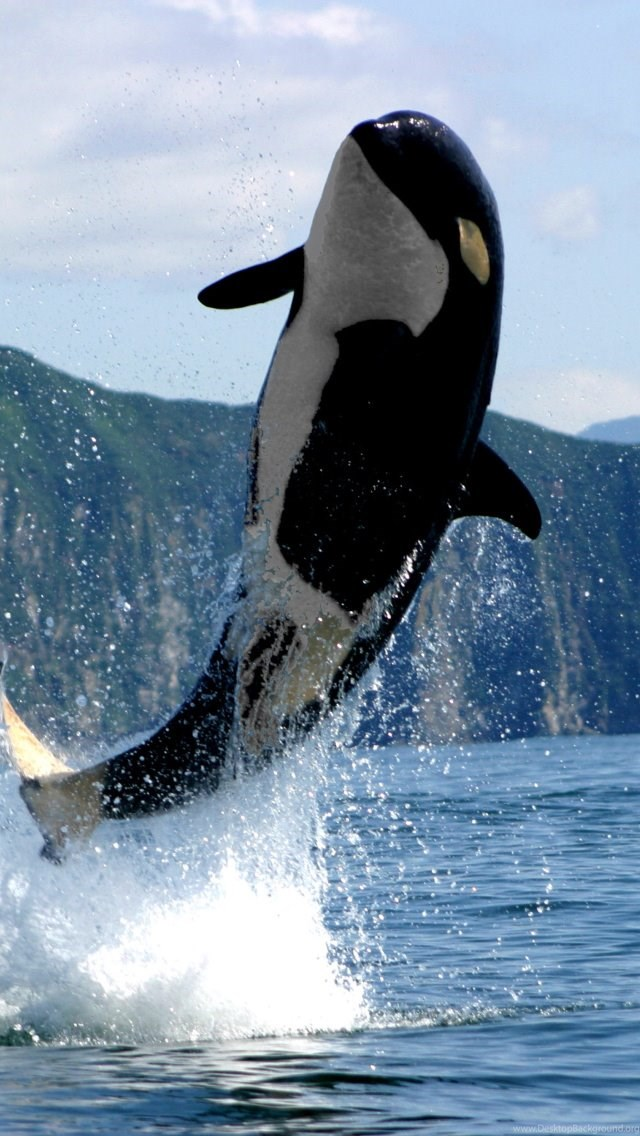 Orca Wallpaper Iphone 91 images in Collection Page 3 640x1136