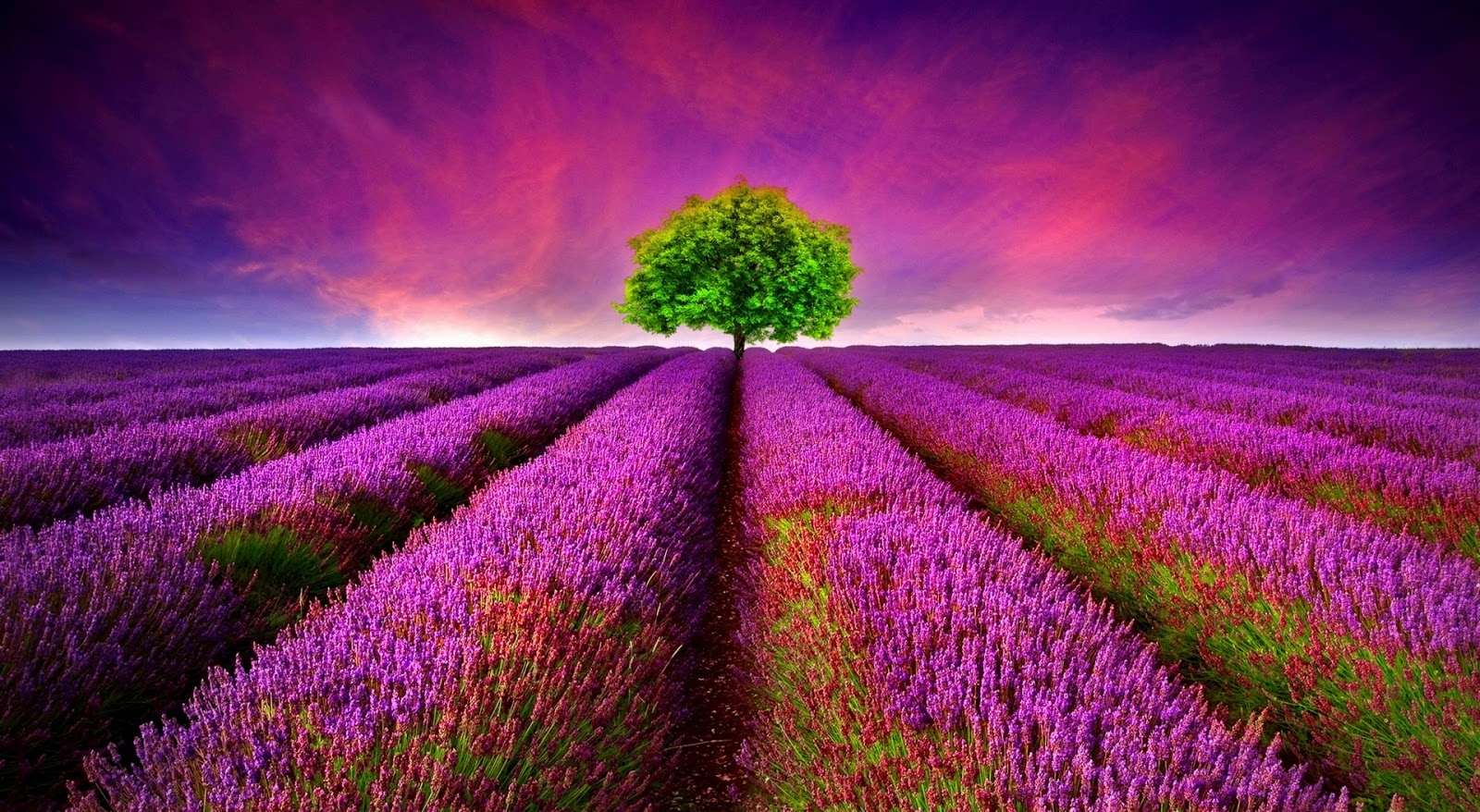 Beautiful Nature Wallpapers Collection
