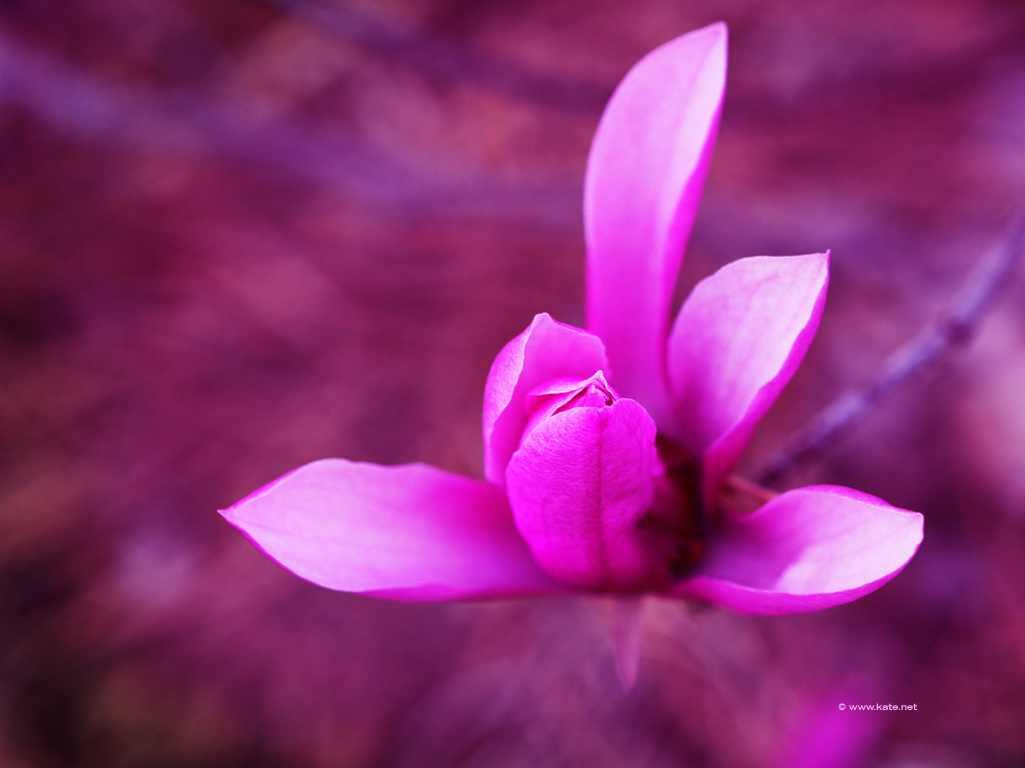 purple flower wallpaper ref kate net www kate net holidays 1025x768