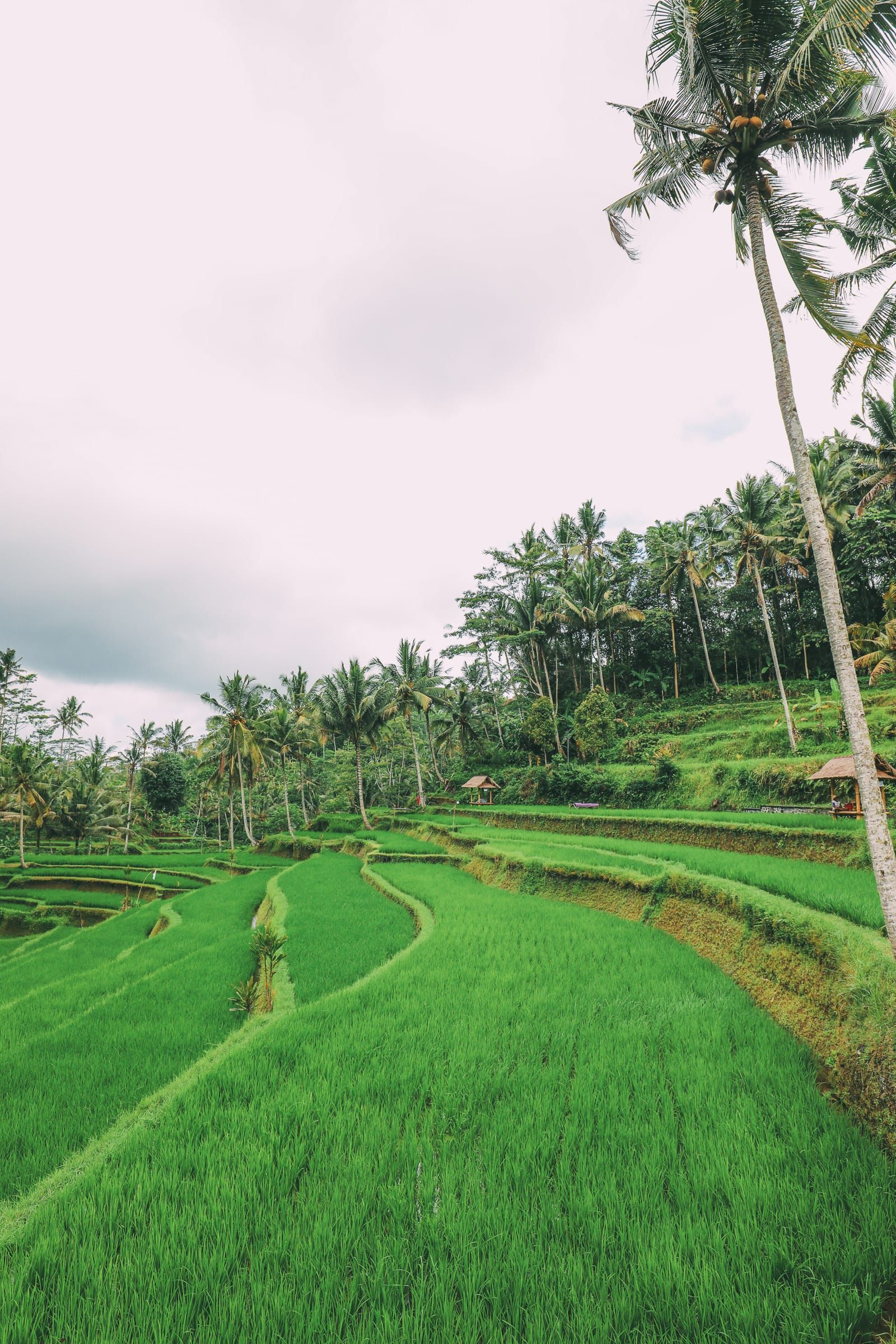 26 Ubud Wallpapers On Wallpapersafari
