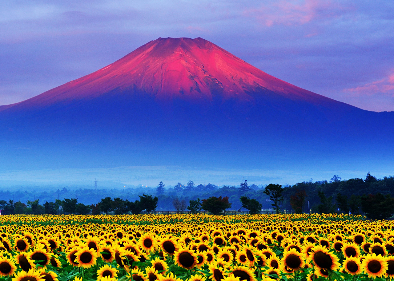 Images Mount Fuji Japan Volcano Nature Mountains Fields Flowers 1280x914