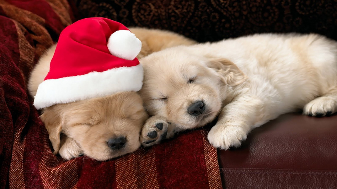 49+] Christmas Puppies Wallpapers Free