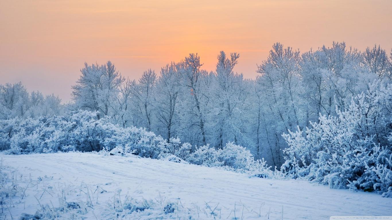 Winter Snow Trees 4K HD Desktop Wallpaper for 4K Ultra HD TV 1366x768